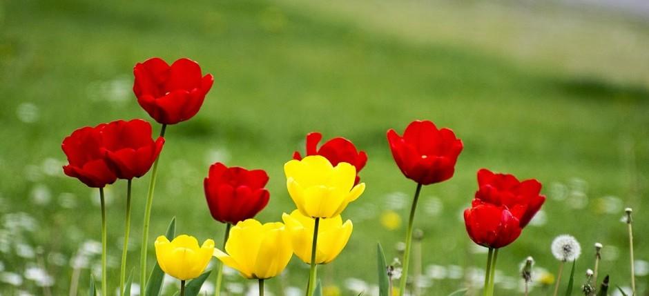 flowers-564947_1280