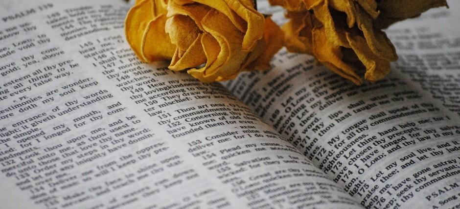 rose-697648_1280